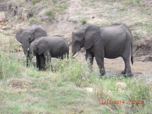Mitgliederreise 2014 Südafrika.05