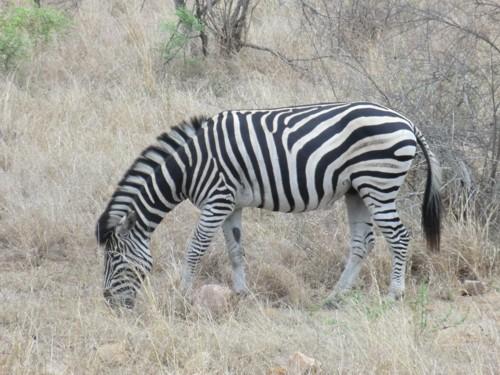 Mitgliederreise 2014 Südafrika.10